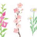 花のカット「色の性格診断書」(エイ出版社)